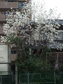 Dscf2820_68