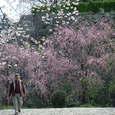 福岡城址の桜~5