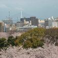 福岡城址の桜~1