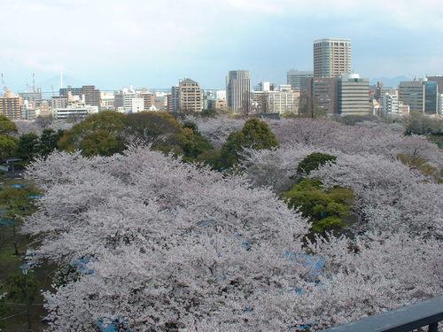 福岡城址の桜~2