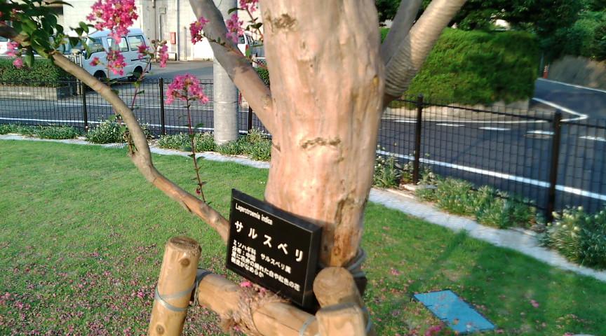 懐かしい木